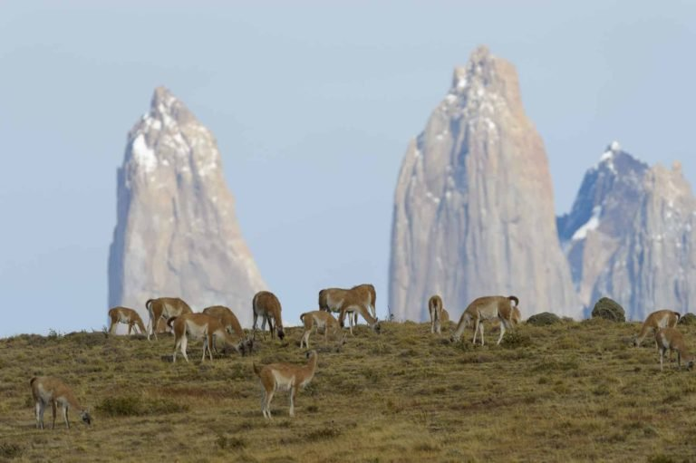 October is the best time to visit Patagonia - animals are giving birth to their young.
