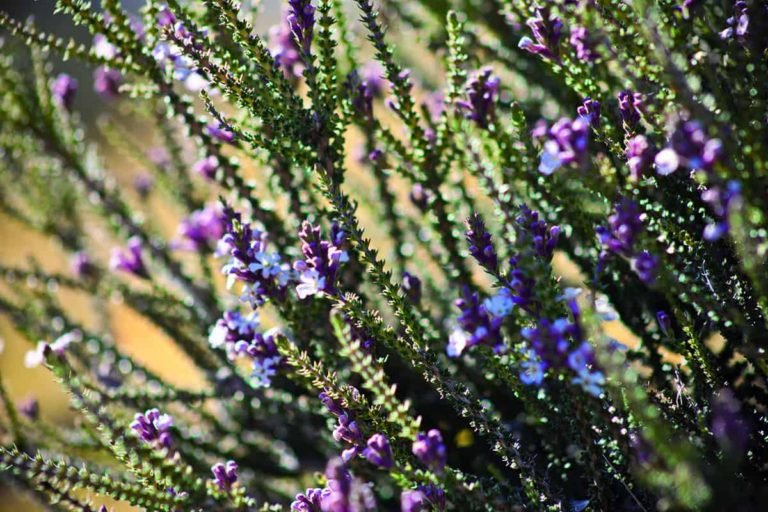 flora patagonia